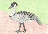 State/Provincial Birds swap