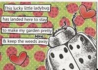 Garden Ladybug
