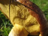 Fungi at the Botanic Gardens