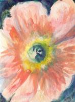 Cropped Poppy