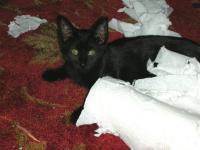 Mephit tore apart paper towels...