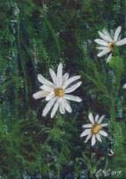 Daisys 2/3