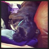 Barnaby, my fur-baby
