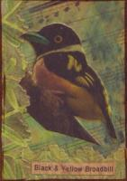 Songbirds - Broadbills