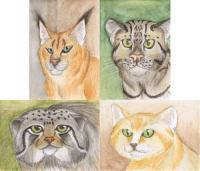 Wildcats Swap II