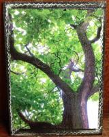 Photo KISS - trees