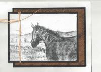 Equine Card