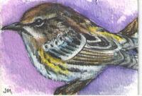 Beautiful Birds Swap