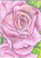 watercolored rose 3