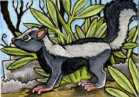 Speculative Zoology #5: Skunk