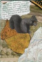 636 Gray Squirrel (Black...