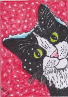 Captivating cats - Let It Snow