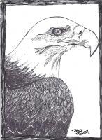 Bald Eagle Print AFT