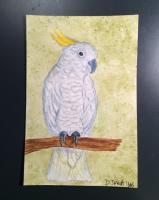 4x6 bird