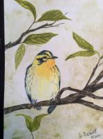 Blackburnian warbler #3