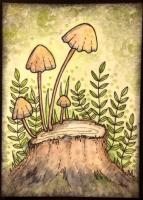 Mushroom ATCs