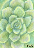 May Challenge : Succulent