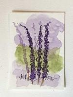 #246 Smell that Lavender
