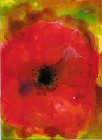 #338 /16  Poppy blossom