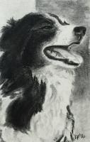 Skeeter the Border Collie (charcoal)