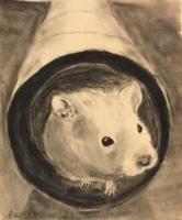Alan's Classroom Hamster, Rupert