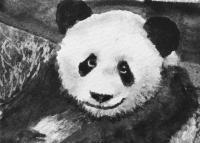Party Panda 🐼