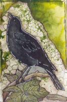 Black Bird Tip In Page