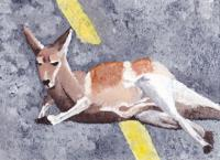 Kangaroo Lounging in Middle of Roadway