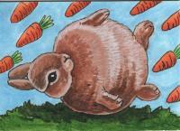 What if bunnies were round?