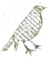 Chrismtas Crow 1