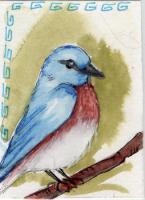 bluebird on green