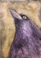 Spooky crow