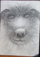 Scruffy doggy