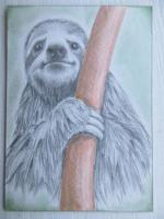 Some smiling sloth
