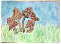 MMH Mushrooms for Robin