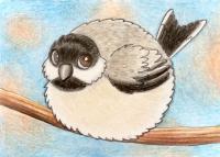 Round Chickadee