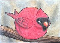 Round Cardinal