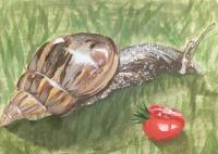 Just terrestrial gastropod mollusk things