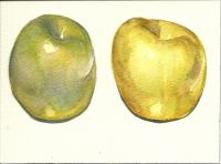 Apples with under painting 1 & 2