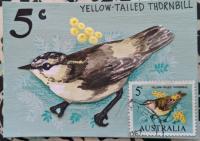 Yellow Tailed Thornbill- Stamp Art