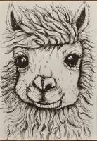 Private trade- Llama