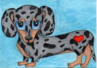 Silver Dapple Doxie