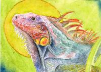 Iguana for color me silver