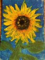 Sunflower Stages