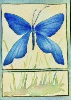 WC Butterfly
