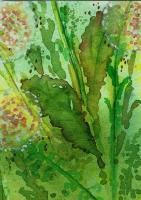 Watercolor Athon Dandelions #5-8