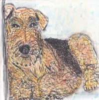 #11 - Airedale Terrier - Dog Breed Project