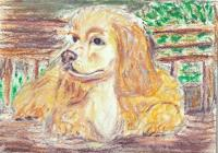 #10 - American Cocker Spaniel - Dog Breed Project