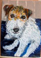 Hummer the Jack Russell Terrier
