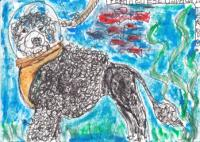 Portuguese Underwater Dog - Dogs 3 Ways